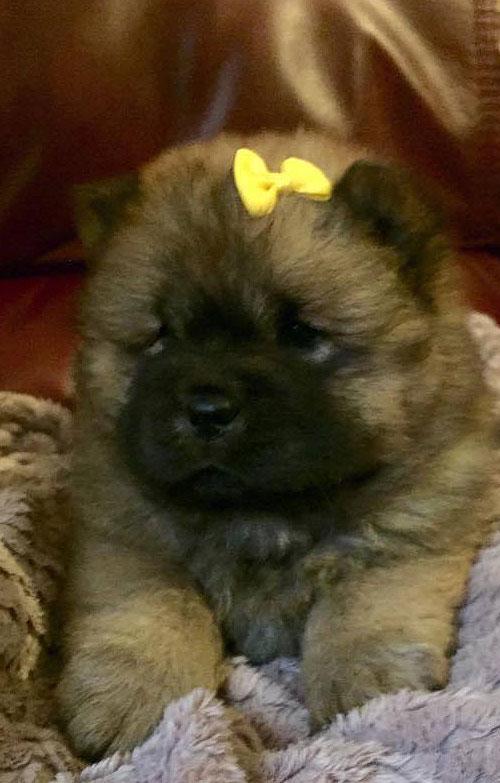 /my_pup